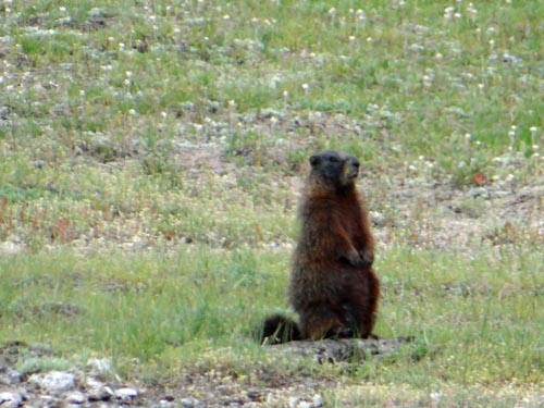 012 marmot 2