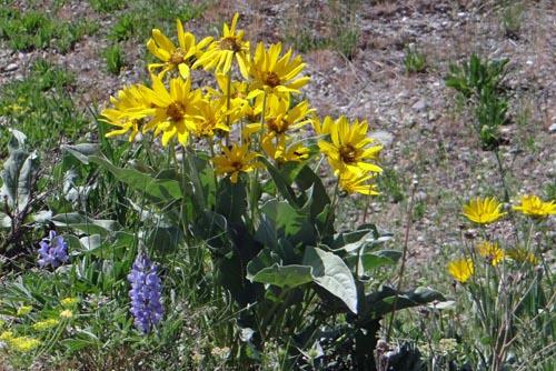 012 pretty yellow flowers