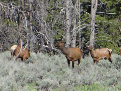 015 elk
