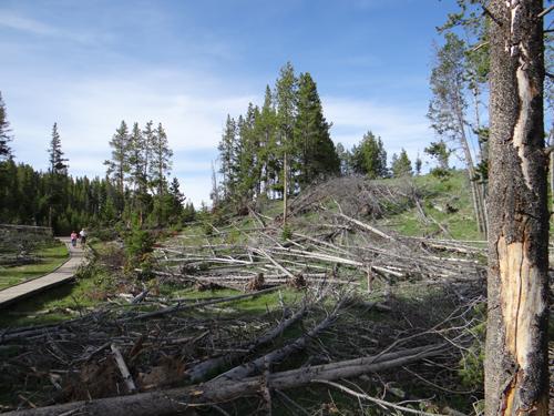 018 leveled trees